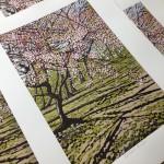 Batsford Blossom close up