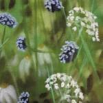 Dylan Lloyd, Island Garden Border VI, Original Landscape Painting, Nature Art 2
