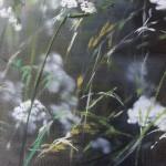 Dylan Lloyd, Island Garden Border VII, Original Landscape Painting, Nature Art 5