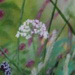 Dylan Lloyd, Island Garden Border X, Original Landscape Painting, Nature Art 3