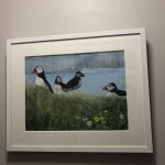Judith Yarrow, Faroes - Puffin, Mixed Media Painting, Gouache, Watercolour, Collage on Paper, Animal Art, Bird Art 11