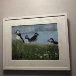 Judith Yarrow, Faroes – Puffin, Mixed Media Painting, Gouache, Watercolour, Collage on Paper, Animal Art, Bird Art 11