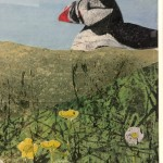 Judith Yarrow, Faroes – Puffin, Mixed Media Painting, Gouache, Watercolour, Collage on Paper, Animal Art, Bird Art 6