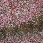 Nicky Chubb, Spring Evening Light, Tree Art, Nature Art 6