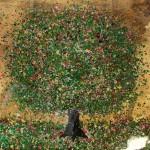 Nicky-Chubb-Summer-Gold-Original-Painting-Tree-Art-Nature-Art-