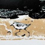Cormorant Detail 1