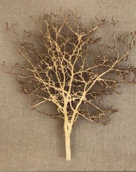Emma Levine, Fawn Hawthorn, Tree Art, Original Papercut Art 11