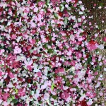 Nicky Chubb, Shimmering Spring, Nature Art 3
