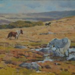 Allbrook Colin Autumn, Dartmoor Rural Art