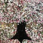 Nicky Chubb, Gentle Spring Blossom, Pink Art, Spring Art, Tree Art, Warm Art 3