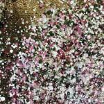 Nicky Chubb, Gentle Spring Blossom, Pink Art, Spring Art, Tree Art, Warm Art 5