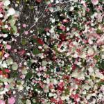 Nicky Chubb, Glittering Spring Dawn 13
