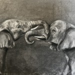 Sophie Harden Duel Sketch, Charcoal on Paper of Elephants 1