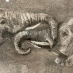 Sophie Harden Duel Sketch, Charcoal on Paper of Elephants 3