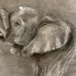 Sophie Harden Duel Sketch, Charcoal on Paper of Elephants 4