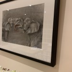 Sophie Harden Duel Sketch, Charcoal on Paper of Elephants 5