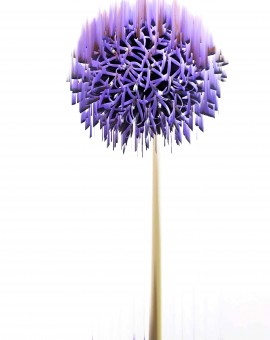 Allium|KatieHallam|Photograph on metal board