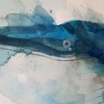 Blue whale, Gavin dobson, watercolour5