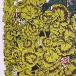 Flower Bed Geranium, clare halifax 2