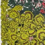 Geranium flowerbed, clare halifax