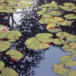 Lily Pond Reflections – Alexandra Buckle
