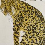 Rare Beauty Amur Leopard Clare Halifax  7