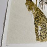 Rare Beauty Amur Leopard Clare Halifax  8