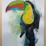 Toucan, Gavin dobson, Watercolour5