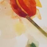 Tulips, Gavin Dobson, Watercolour2