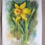 Daffodil, Gavin Dobson, Watercolour 6