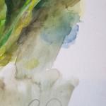 Daffodil, Gavin Dobson, Watercolour4
