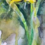 Daffodil, Gavin Dobson, Watercolour5