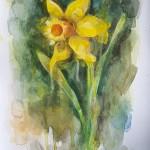 Daffodil, Gavin Dobson, watercolour