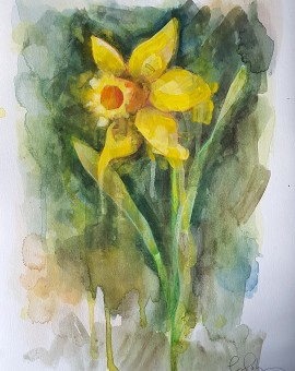 Daffodil, Gavin Dobson, watercolour