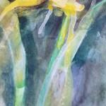 Daffodil. Gavin Dobson, Watercolour3