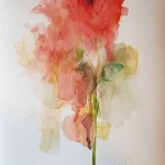 Red Rose, Gavin Dobson, watercolour6