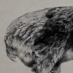 Tammy-Mackay-Dutch-dodo-LR copy 2