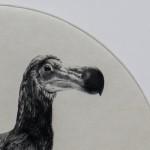 Tammy-Mackay-Dutch-dodo-LR copy 3