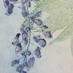Wysteria, Charlie Davies close up