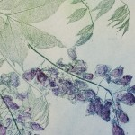 Wysteria, Charlie Davies close up 2