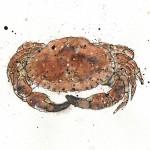 crab scan