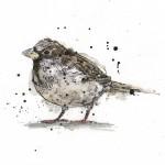 delicate sparrow scan