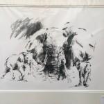 elephant studies1