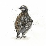 gb-grouse1-sized
