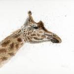 giraffe iris scan