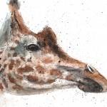 giraffe1.1