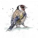 goldfinch iris scan