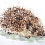 hedgehog hairbrush 3