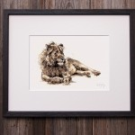 lion in frame sarah d pic