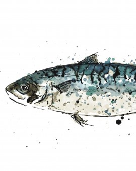 mackerel scan crop